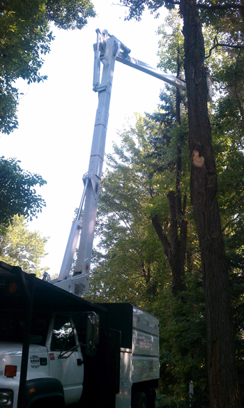 Bucket Truck Services For Tree Trimming And Removal Clark